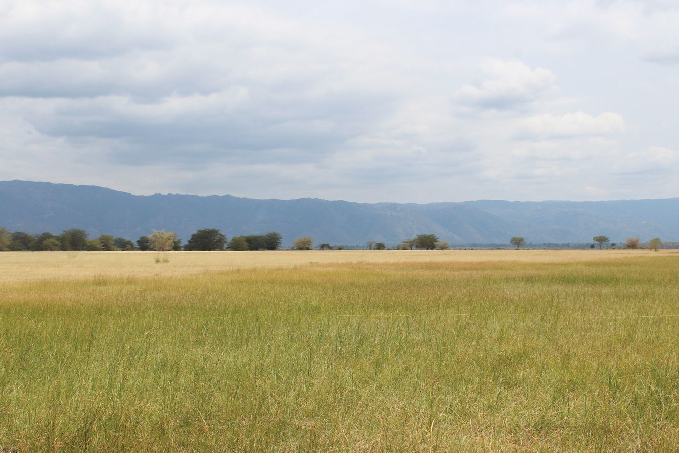 Green grass growing in a pasture managed by the Sustainable Rangelands Initiative