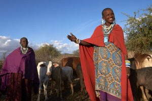 Maasai women with cattle